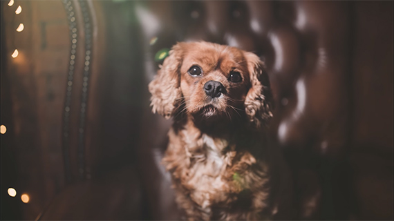 tricks for dog photographers