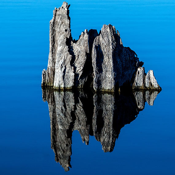 stump in water